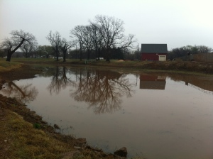 After months of being dried up, the pond has water in its banks.
